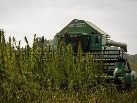 hemp-grow.jpg
