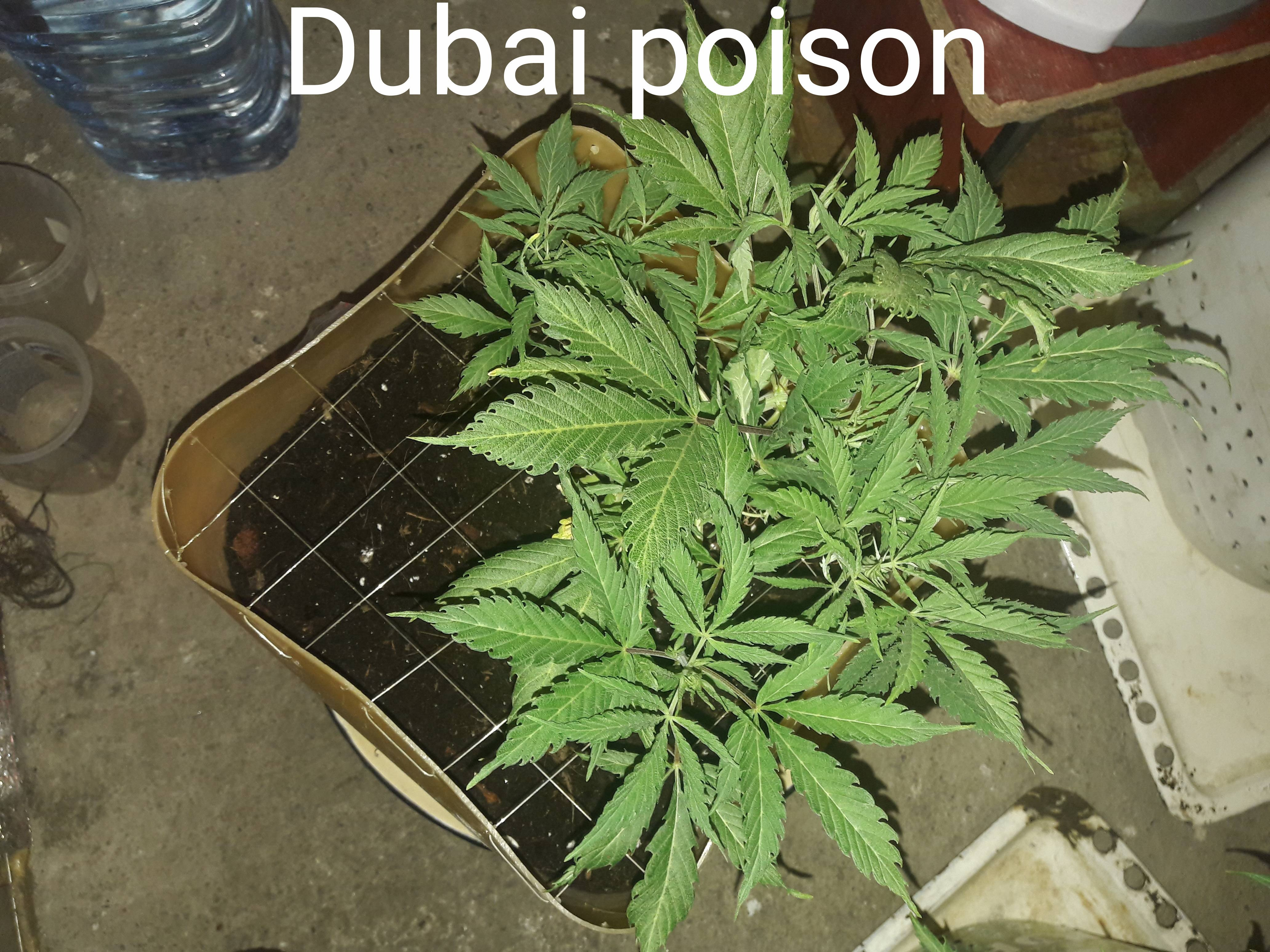 Можно ли один раз покурить марихуану аргументы против легализации марихуаны