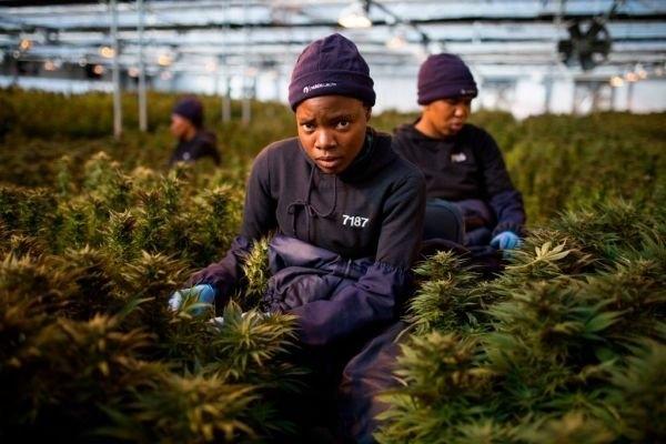 african-cannabis.jpg