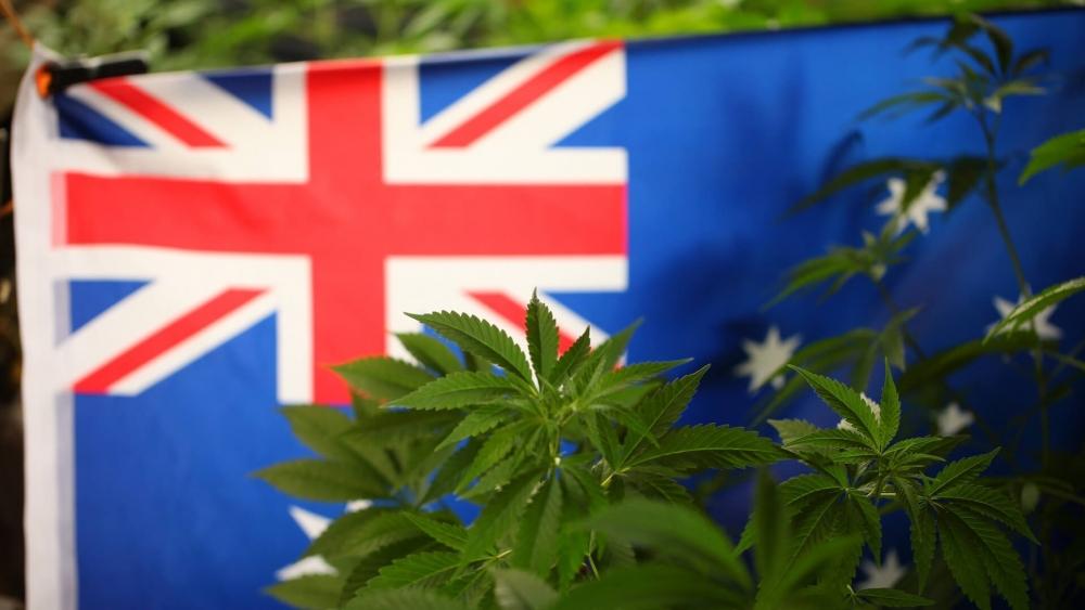 cannabis-australia-decr(1).jpg