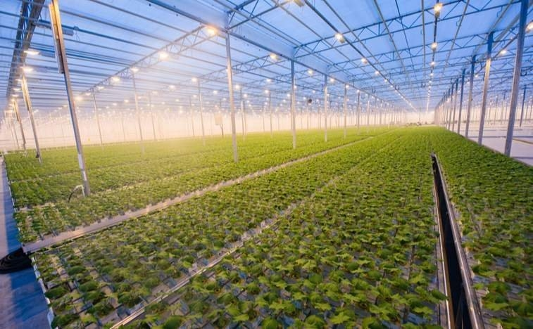 canopy-growth-greenhouse.jpg