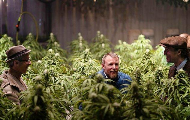 О марихуане все серии конопля в кемерово