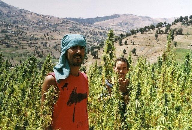 marocco-cannabis.jpg