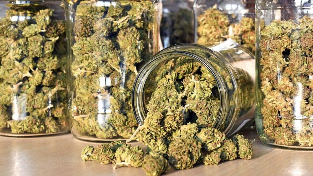 cannabis-oversupply-canada(1).jpg