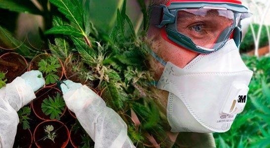 cannabis-ppe-donated.jpg