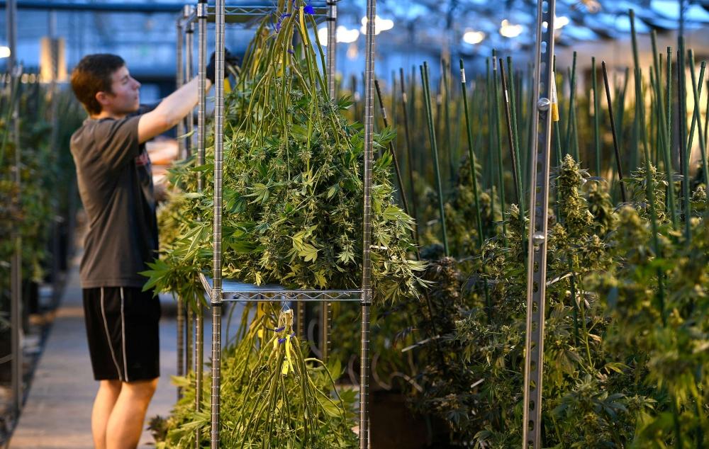 cannabis-stored-600(1).jpeg
