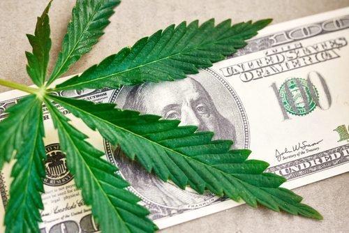 Форум по культивации конопли как вредит курение марихуаны