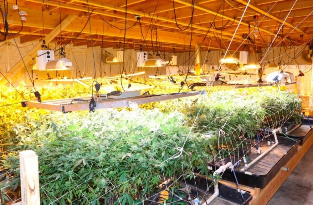 las-vegas-cannabis-farm.jpg
