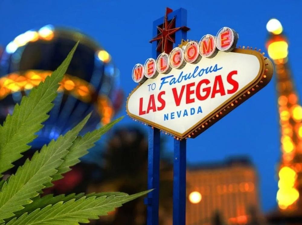 las-vegas-cannabis-seized.jpg