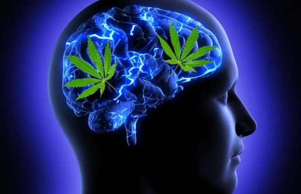 cannabis-brain-teen(1).jpg