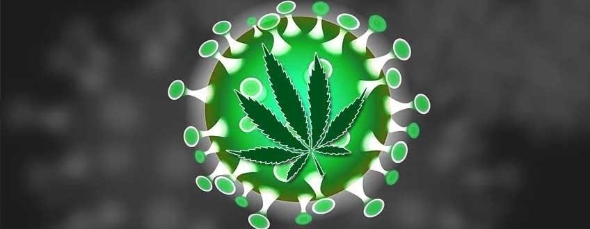 cannabis-protects-coronavirus.jpg