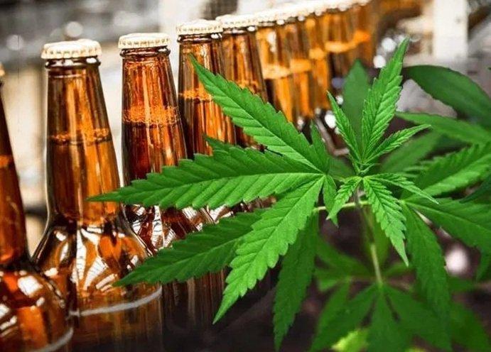 Конопля на спирту печенье с марихуаной отзывы