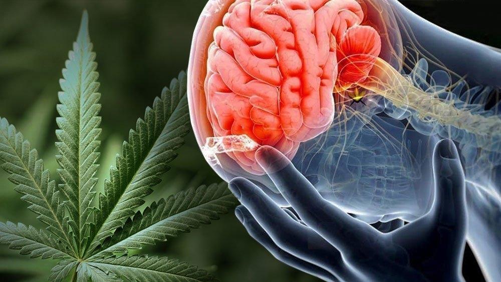 cannabis-brain-protect.jpg