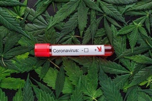 cannabis-coronavirus-inflamation(1).png
