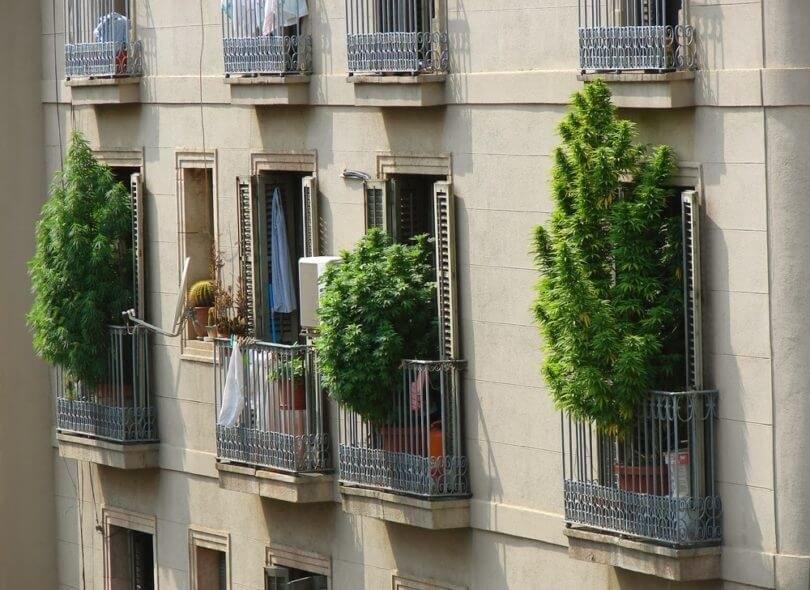 cannabis-grow-barcelona(1).jpeg