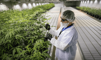 cannabis-industry-workers(1).png