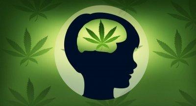 cannabis-iq-test.jpg