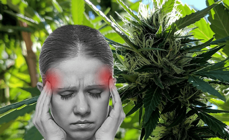 cannabis-migraine-use(1).png