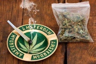 cannabis-report-netherlands(1).jpg