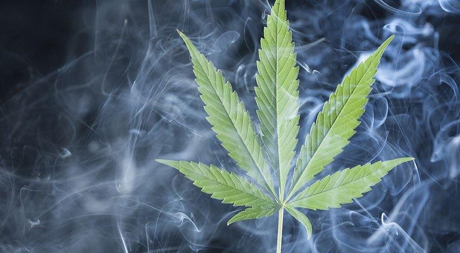 Библии о выращивании конопли от а до я марихуана в челябинске купить