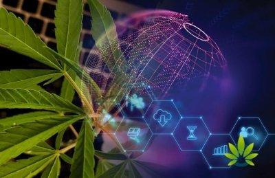 cannabis-track-blockchain(1).jpg