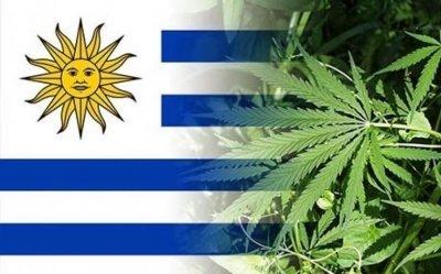 cannabis-uruguay-export(1).jpeg