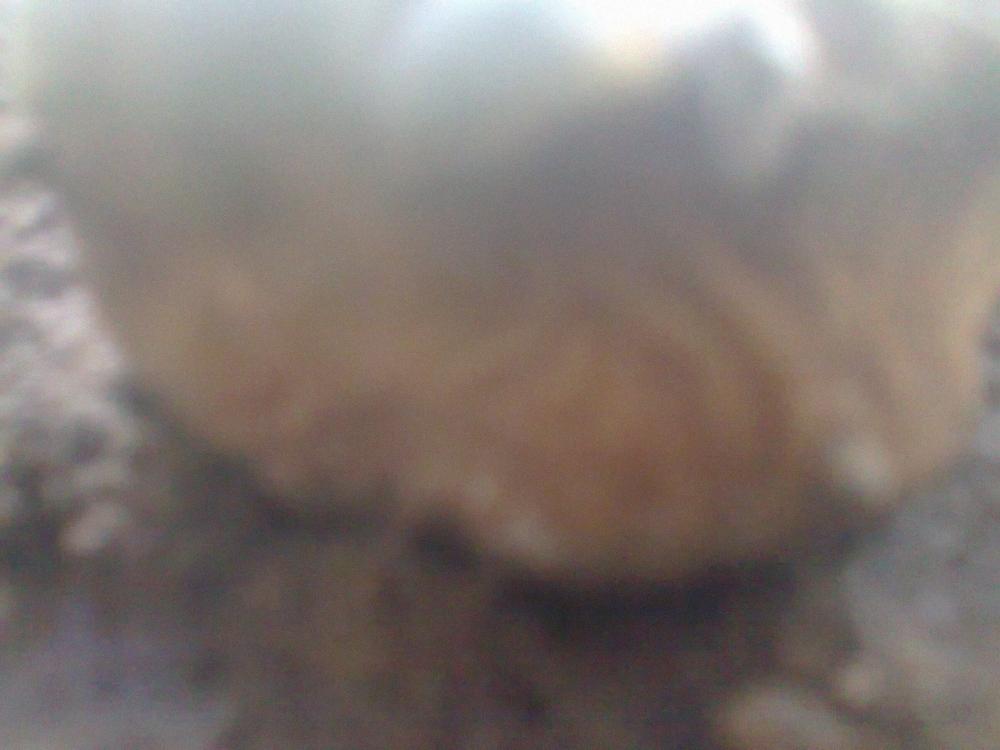 2038511100_0196.thumb.jpg.f249e45c1bb3e999454a1e382b2a7ca4.jpg