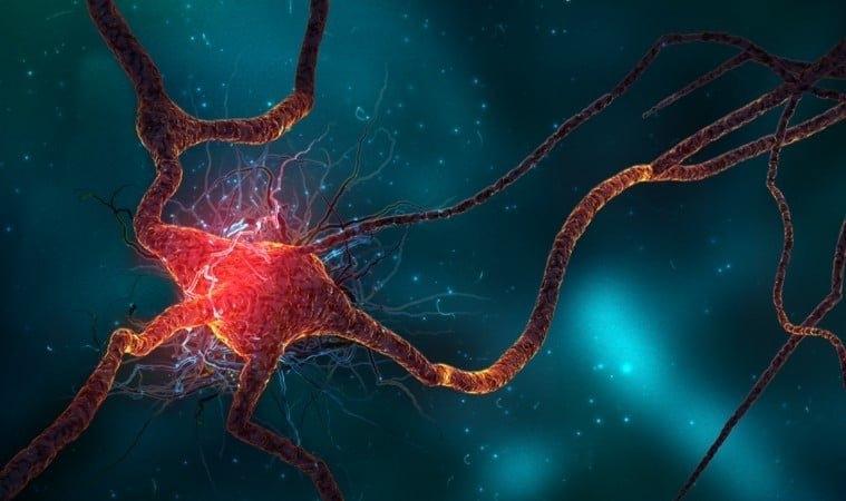 ayahuasca-brain.jpg