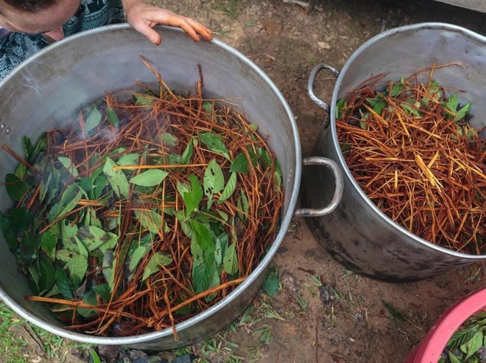ayahuasca-medical-use.jpg