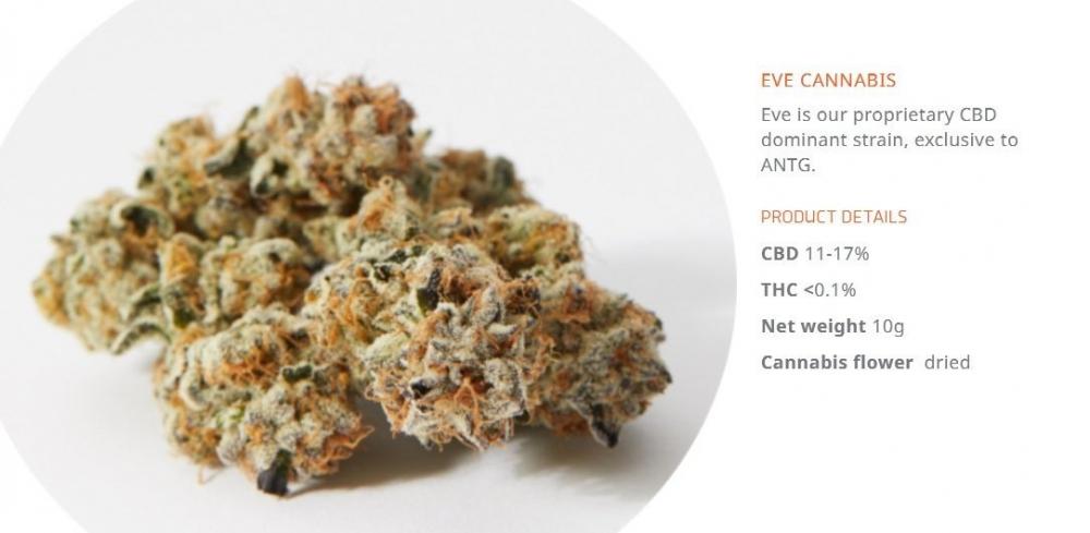 cannabis-eve.jpg