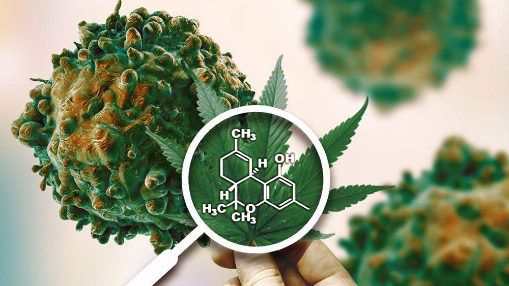 cannabis-killing-cancer.jpg
