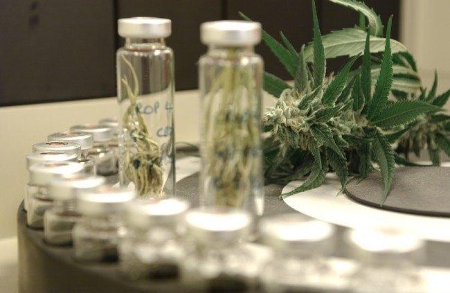 cannabis-testing-fda.jpg