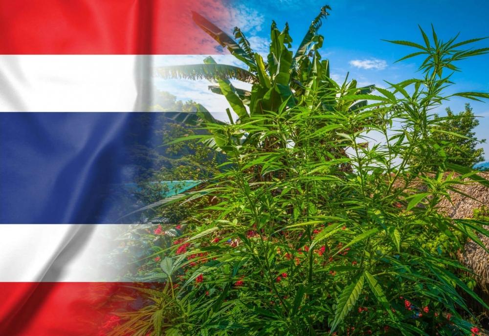 cannabis-thailand-16-drugs(1).jpg