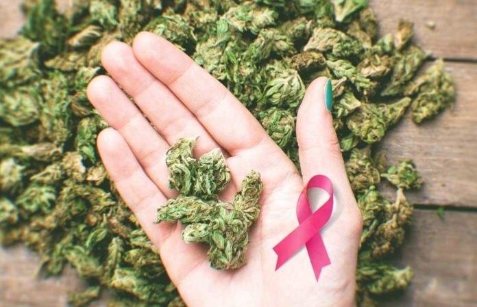 cannabis-cancer.jpg