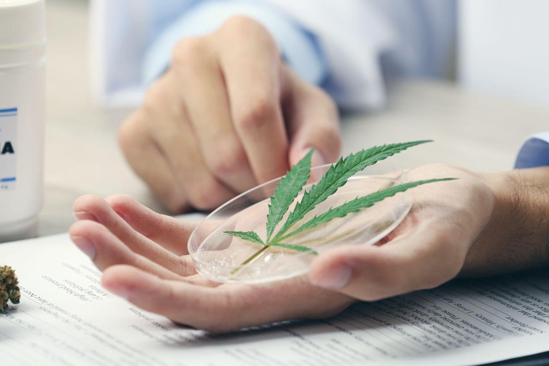 Гепатит с лечение марихуаной как посадить росток конопли