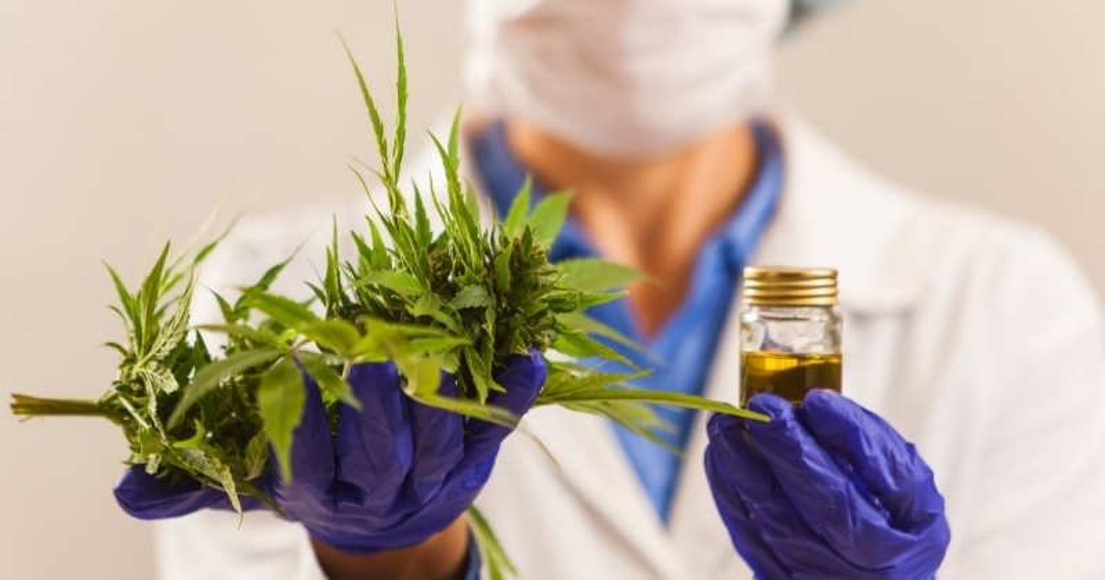 cannabis-immune-system(1).jpg