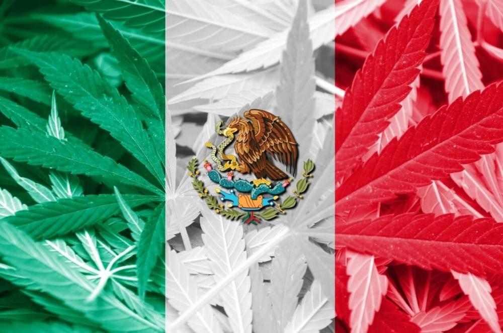 mexico-cannabis-senate(1).jpg
