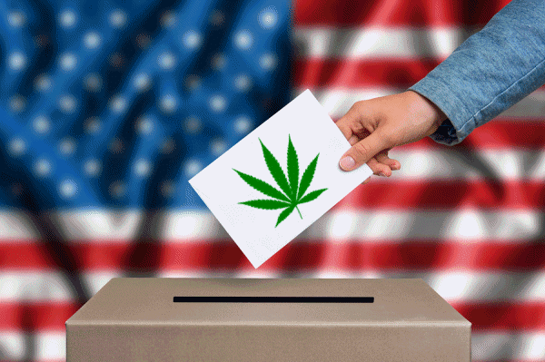 cannabis-vote-usa.png