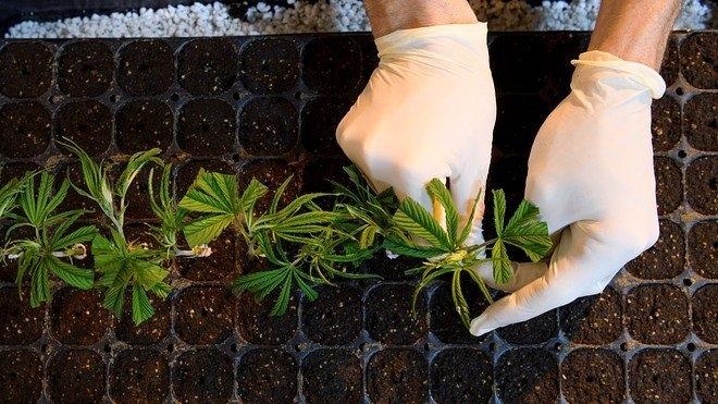 cannabis-academy-sa.jpg