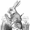 wh-rabbit